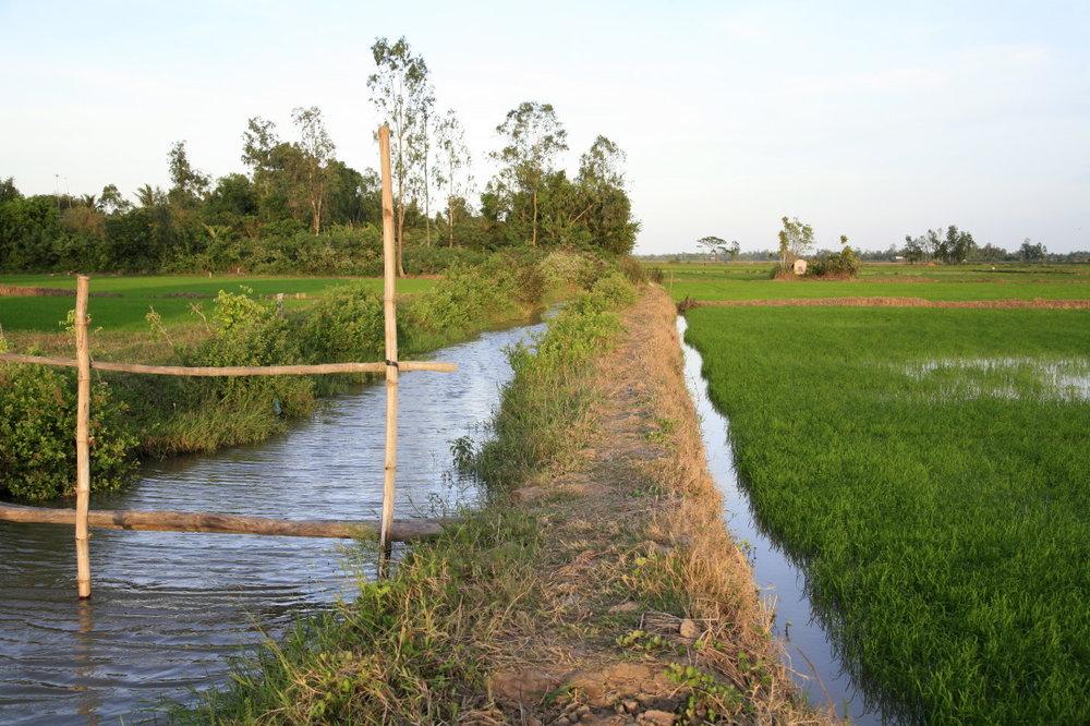 Les rizières entre CanTho et SaDec