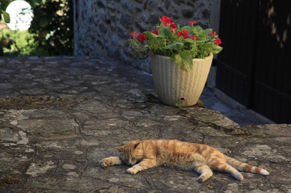 Najac, un petit somme sous le soleil