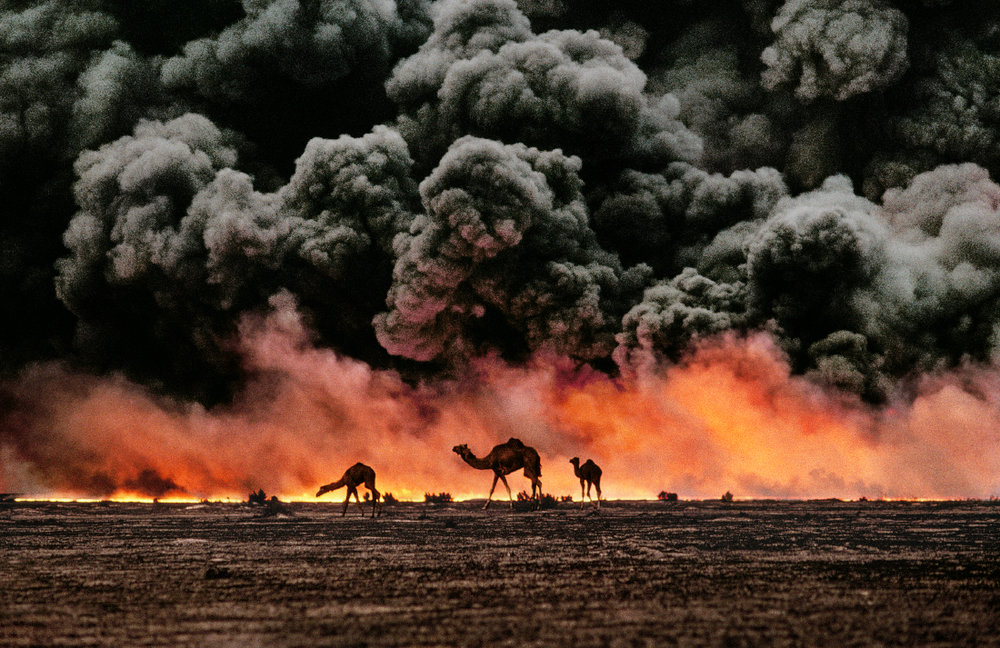 Ahmadi Oil Fields, Kuwait 1991, Camels and oil fire - © Steve McCurry
