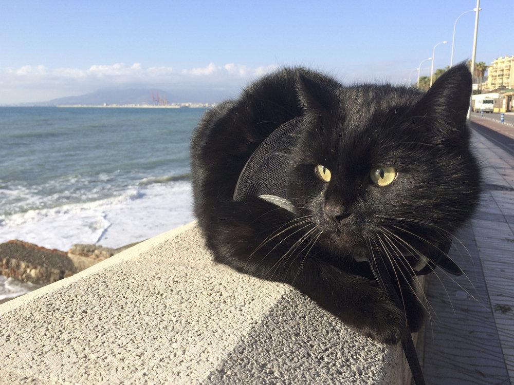 Corto en excursion à la plage des chats !
