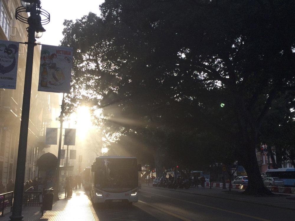 La parade des autobus sous les ficus d'Alameda Principal