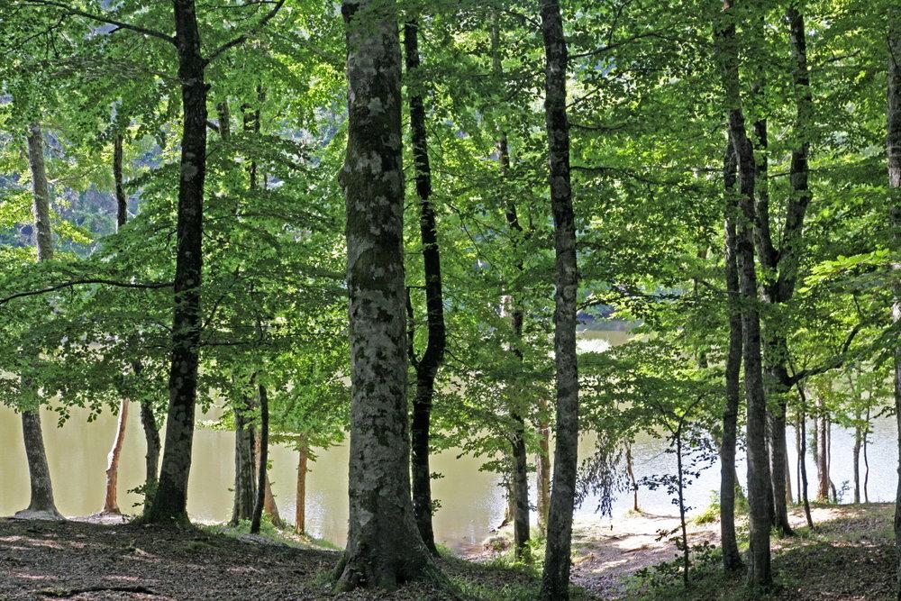 Dans la fraîcheur de la Foresta Umbra