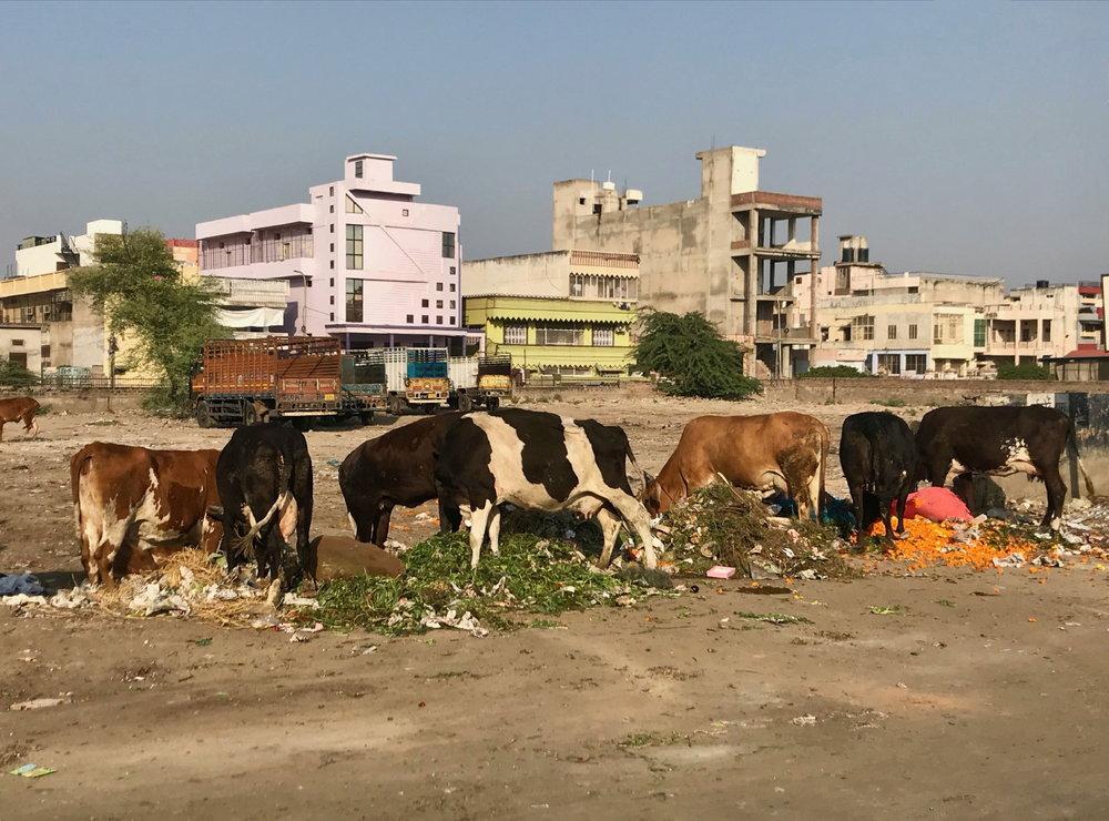 Jaipur (17 au 19 novembre)_1.JPG