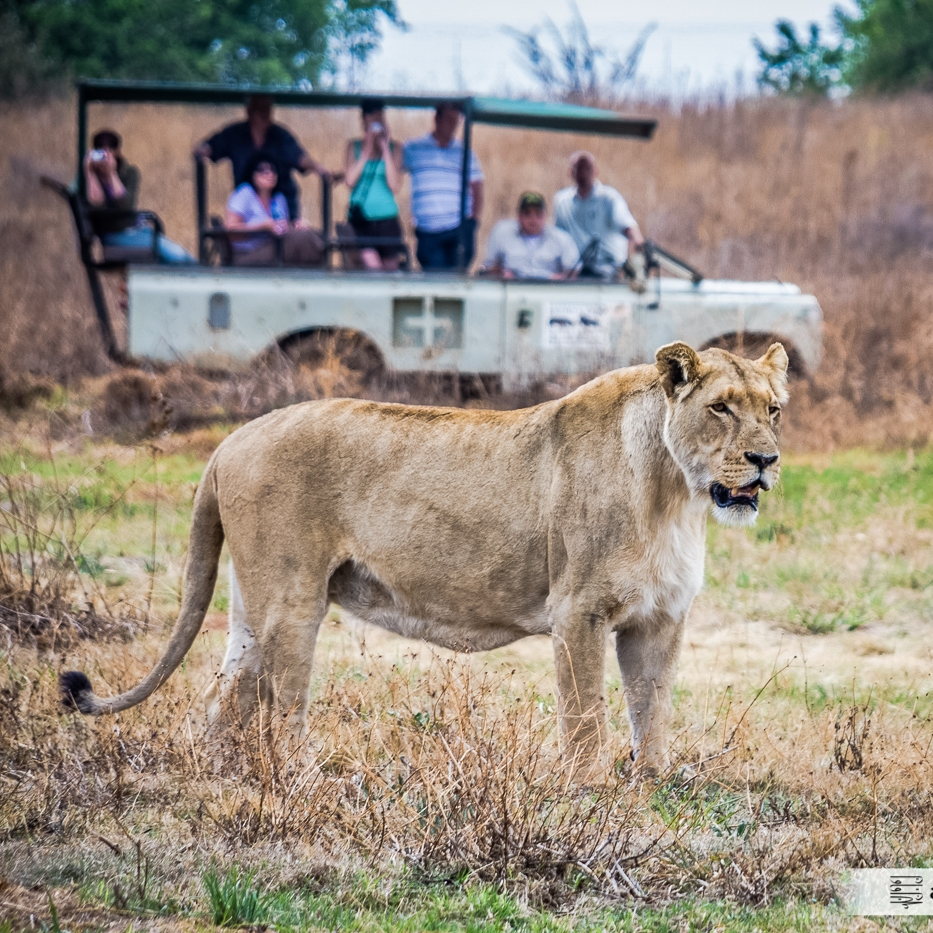ABS-Travel-Art-Photography-South-Africa-Juhansburg