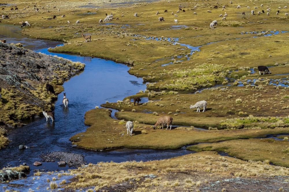Ali-Barqawi-Studios-Explore-Series-Travel-Adventure-Documentary-C4CGAZA-Bolivia-Mount-Tarija-2015-250.jpg
