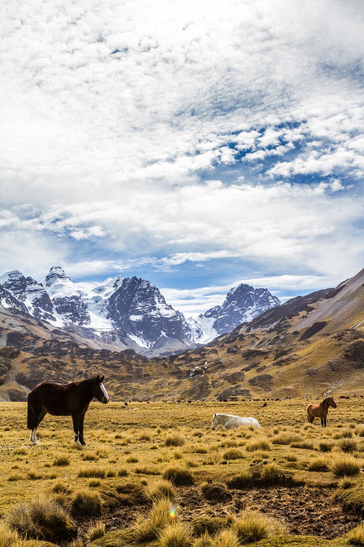 Ali-Barqawi-Studios-Explore-Series-Travel-Adventure-Documentary-C4CGAZA-Bolivia-Mount-Tarija-2015-257.jpg