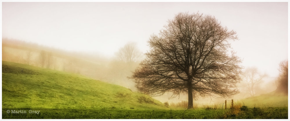 'Misty in the Valley'... Les Vauxbelets Valley on a misty March evening...
