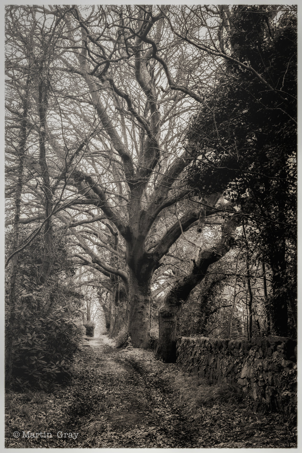 'Where the wild things are'... A woodland path in Guernsey...