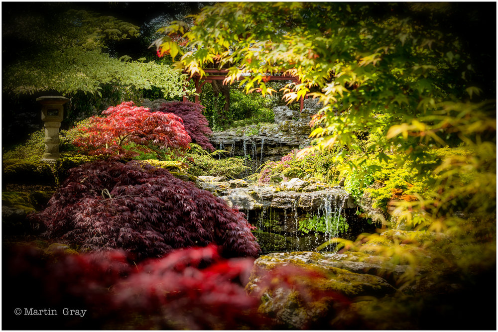 'The Japanese Garden'... Stunning colours at Sameres Manor in Jersey... - Stunning colours at Sameres Manor in Jersey...