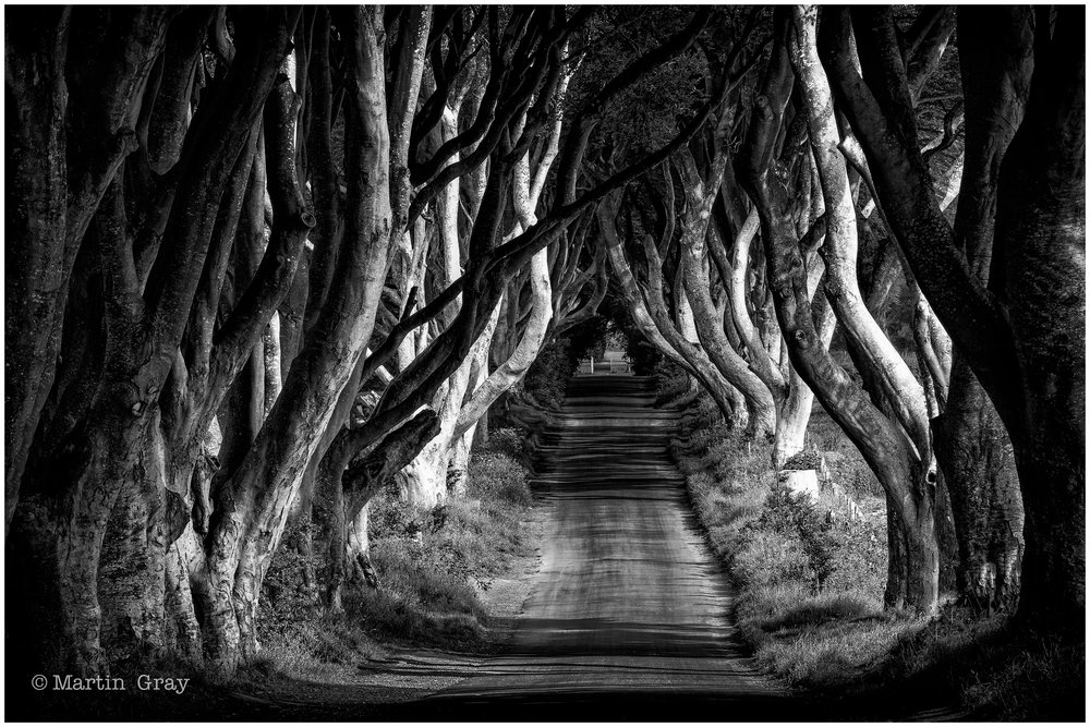 'Game of Thrones'... Dark Hedges in Northern Ireland, a scene from the Game of Thrones TV Series.....