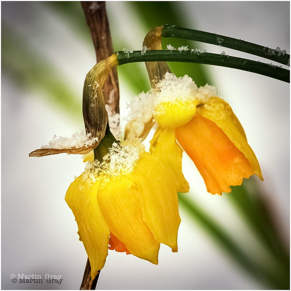 'Hang in there Daff'... Snow made a rare visit to Guernsey!
