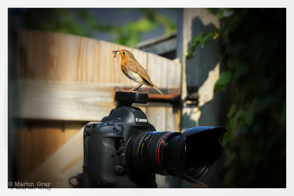 'Robin likes Canon'... Whilst shooting a nature shot I had a visitor...