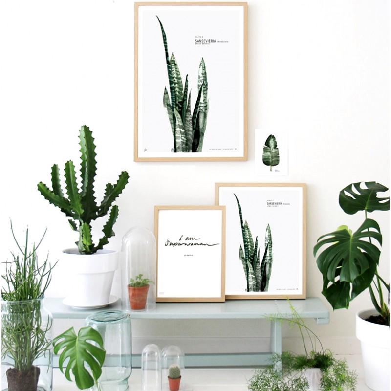Affiche botanique Twicy Store 39,90€