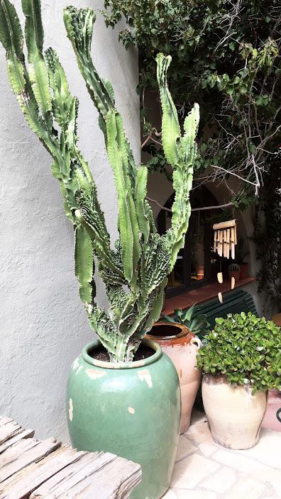 ibiza 2018 Cactus