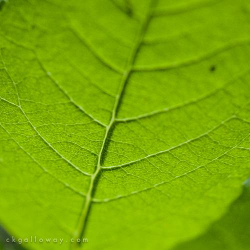 ckgalloway-macro-flora-yukon-6804.jpg