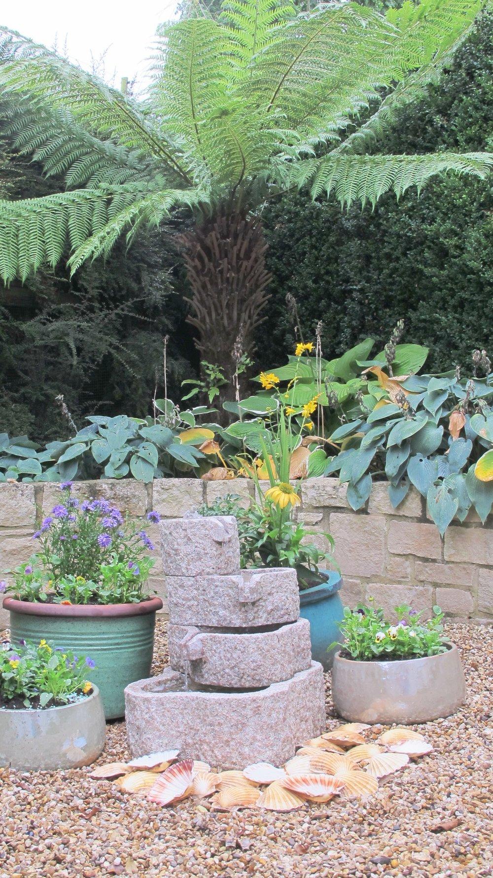 Front-garden-tree-fern