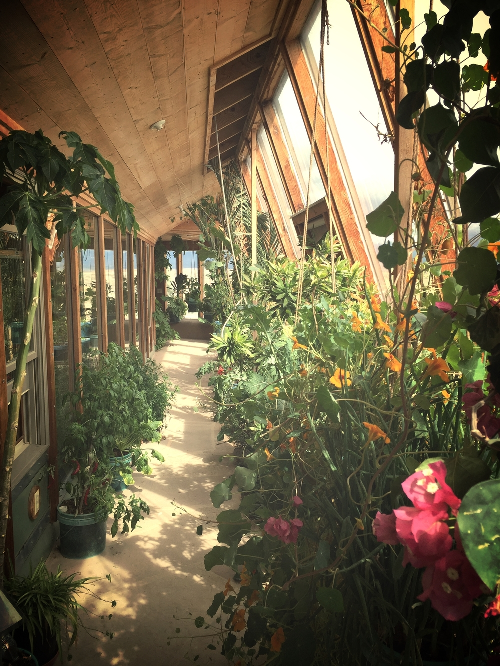Finished green house at maximum production. Grows edible plants year round. Photo by Matty Liot.