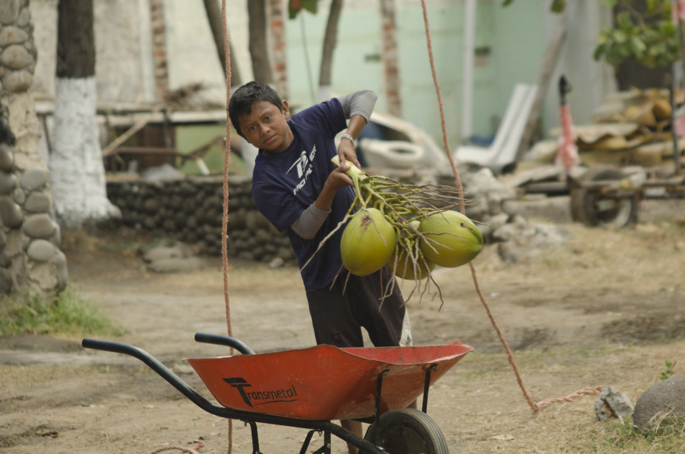 Jose Domingo helps his father with the coconut harvesting