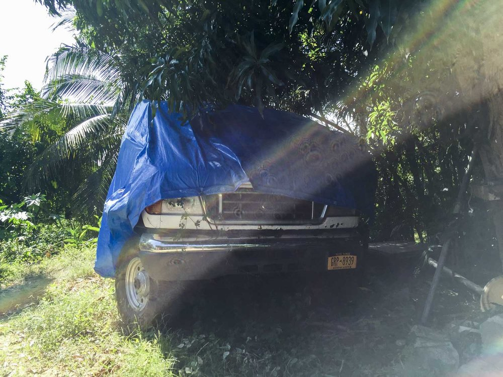 Beast covered under the mango tree