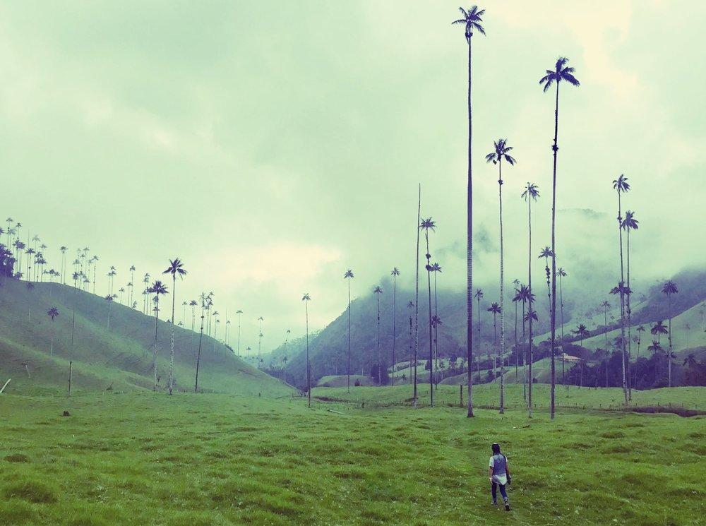 Exploring El Valle de Cocora