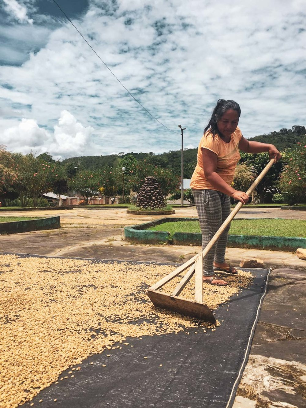 Locals grow coffee and cacao