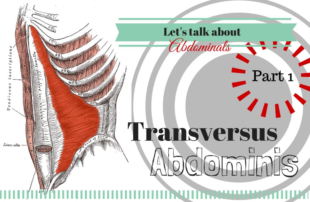 Transversus.png