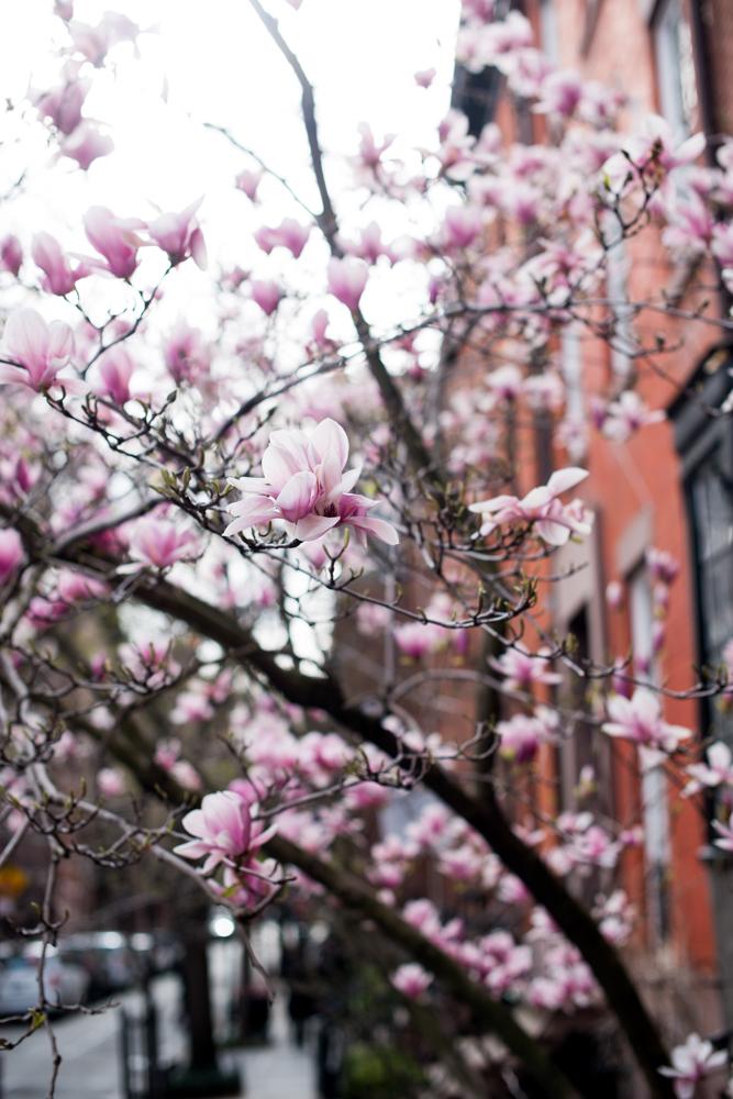 new-york-spring-cherry-blossoms.jpg