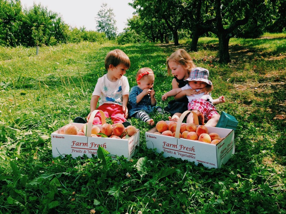 of Course, their parents pick the peaches.