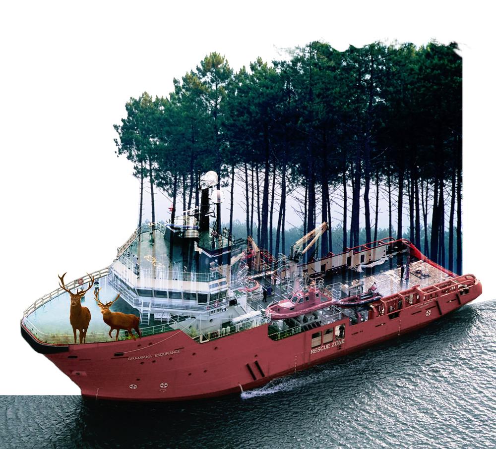 ship_woods.jpg