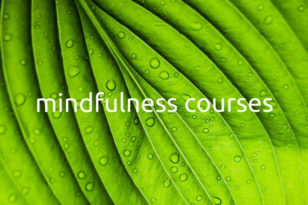 mindfulness courses.png