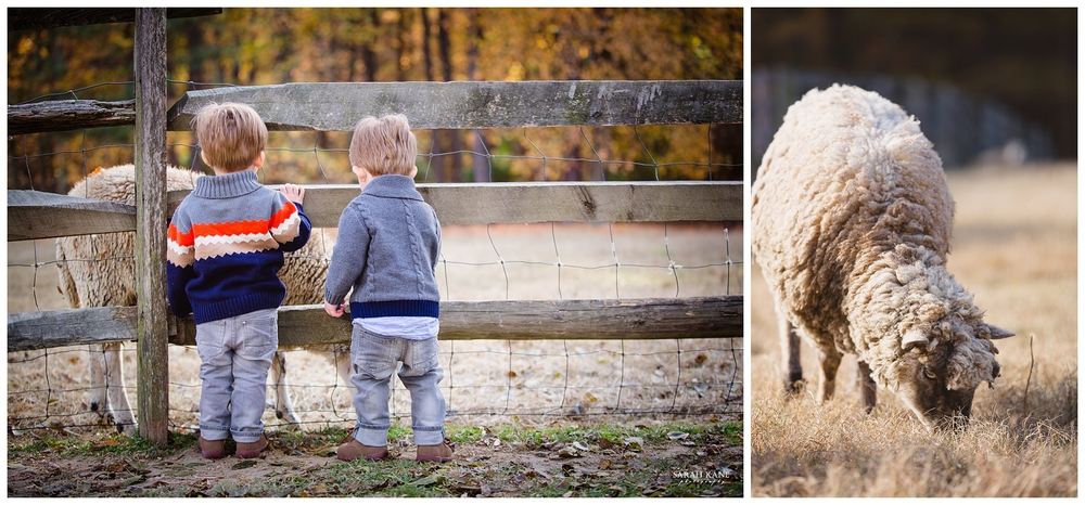 Campbell- Family Portraits- Meadow Farms Glen Allen VA- Sarah Kane Photography 023.JPG