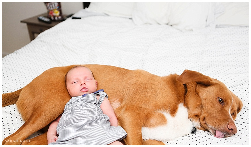newborn & pet portraits | Sarah Kane Photography