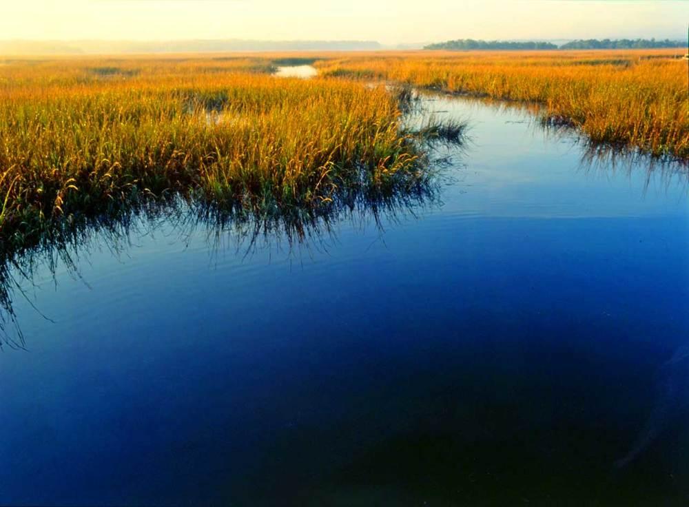 Marsh.jpg