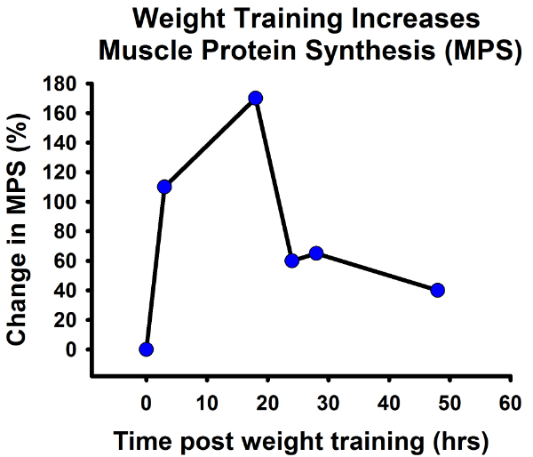 Figure 2: Muscle Protein Synthesis Increases Dramatically after a Single Session of Weight Training (8).