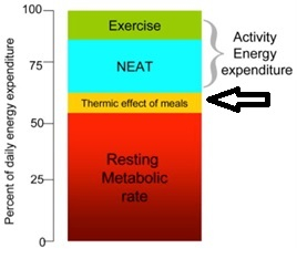 The thermic effect of meals is trivial to total energy expenditure (10).