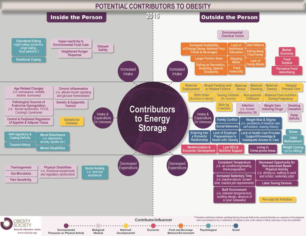 Obesity Society Potential Contributors to Obesity Infographic