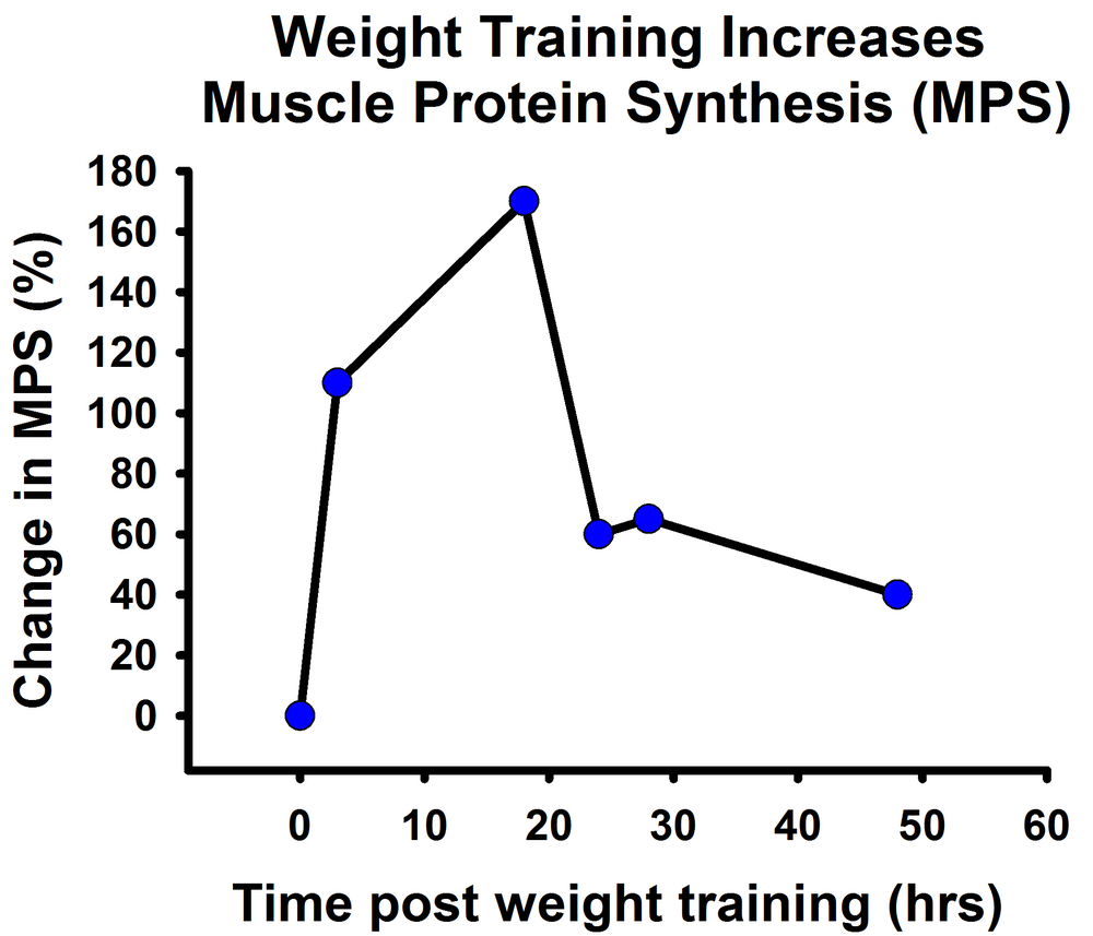 Muscle Protein Synthesis After Weight Training