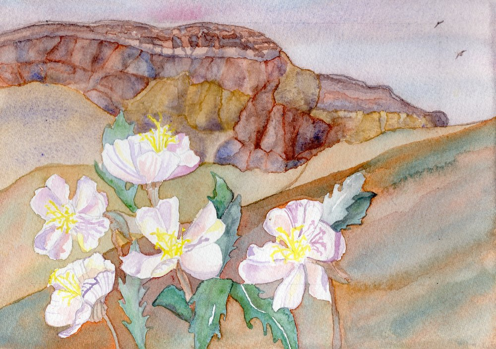 Primrose, Ghost Ranch, NM
