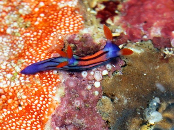 sea-slug.jpg