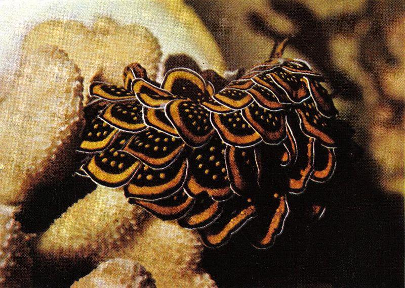 sea_slug4.jpg