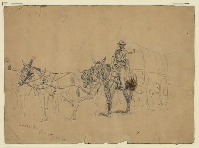 Edwin Forbes,  Study of a mule team and wagon, with driver  (September 30, 1863). Library of Congress.