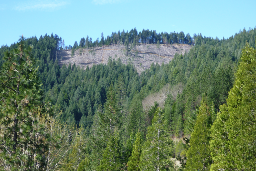 Recent clearcut amid mature second growth