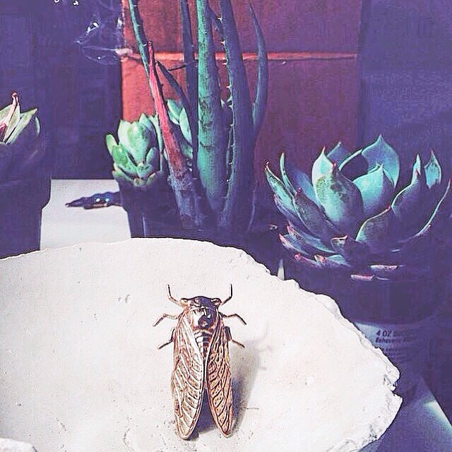 Cicada Ring! #TYRAMIN cicada ring in one of our unfinished bowl  prototypes in a #succulent garden 🌵 #womenswear #menswear #jewelry #beautifulhome #interiors #onmytable #pursuepretty #livethelittlethings #liveauthentic #abundance #decor #home #homedesign #flashesofdelight #interiores #stylegram #thehappynow #thatsdarling #vsco #vscocam #kinfolk #livefolk