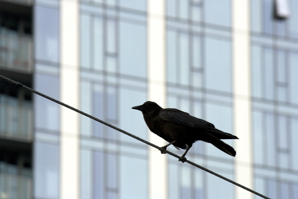 15_Watcher on the wire_2_7MB.jpg