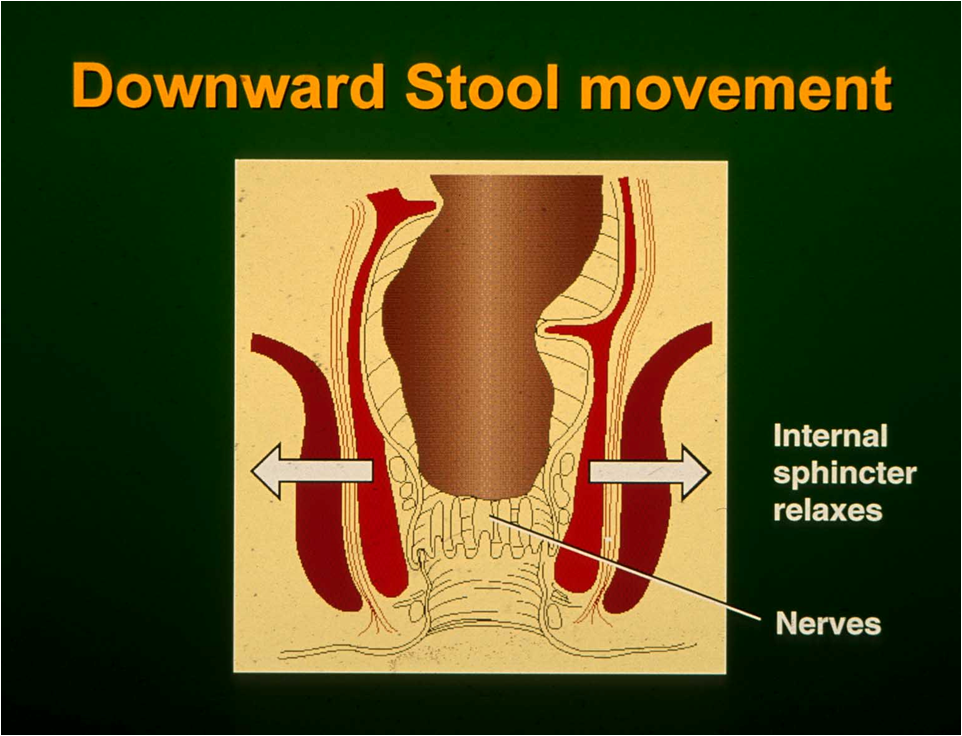 downward stool movement C Norton.png