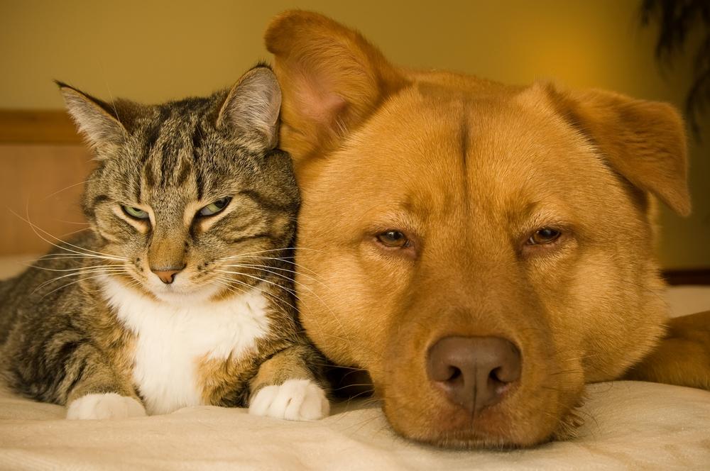 Healing_Animals.jpg