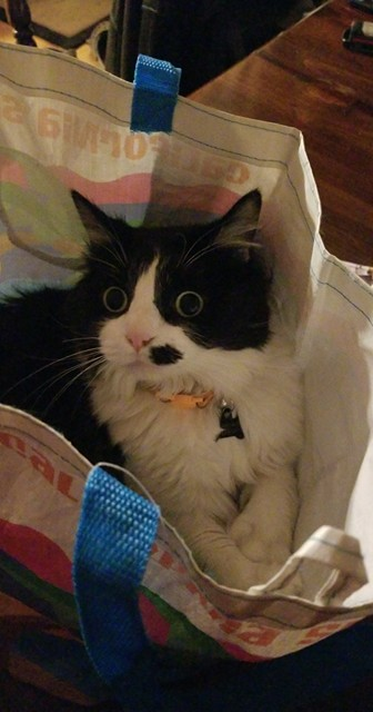 MJ loves sitting in bags, rolling in the dirt and drinking toilet water