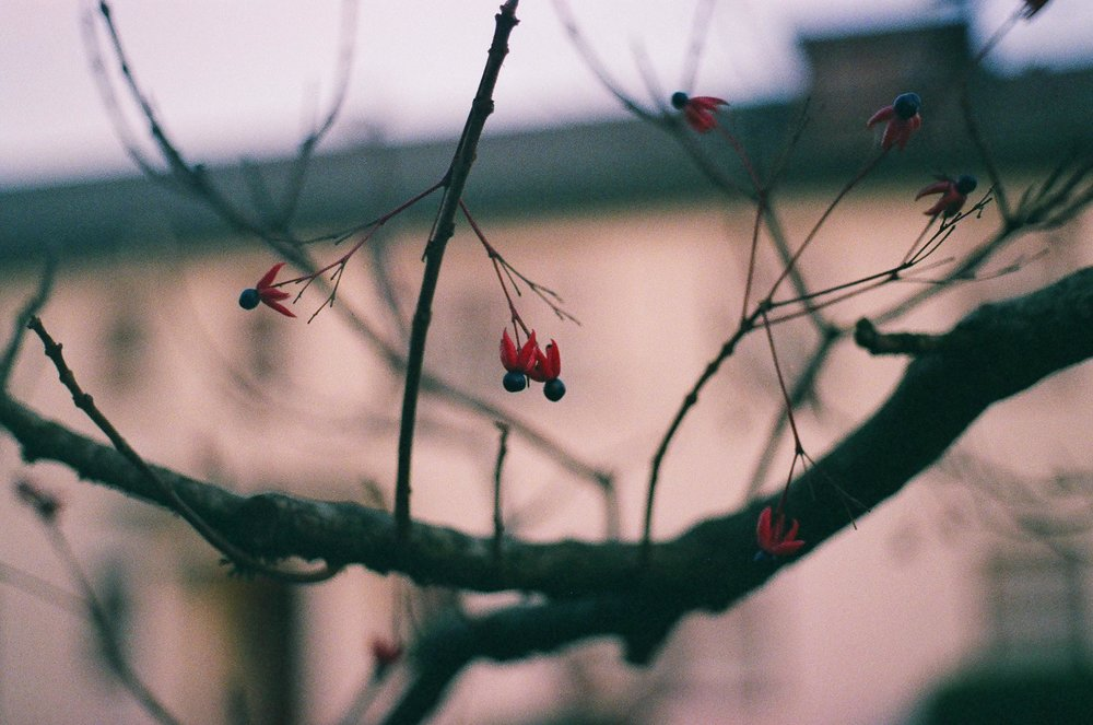 35mm-favorite-11.jpg