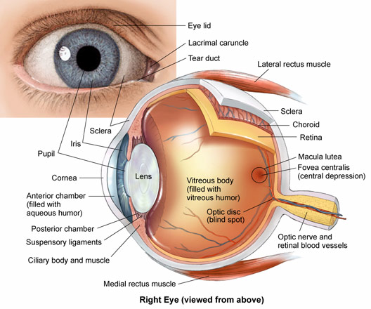 Eye Anatomy — Central Florida Retina