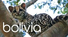 bolivia-2.jpg